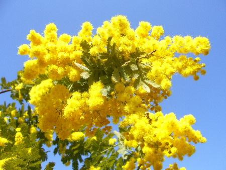mimoza0186.JPG